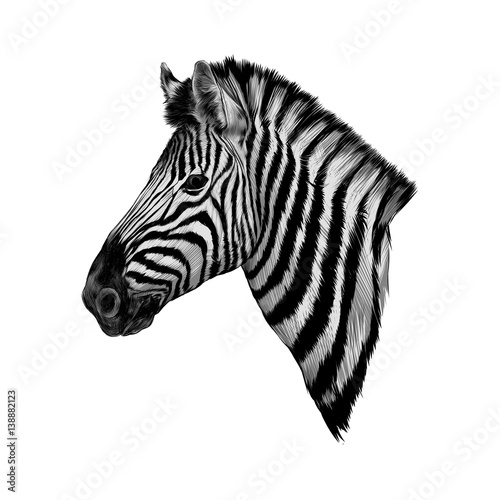 a Zebra head profile vector - 138882123