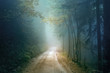 Magic autumn color foggy forest road. Scary dark blue green colored countryside woodland.