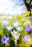Spring Blooming flowers and fly butterfly - 138931575