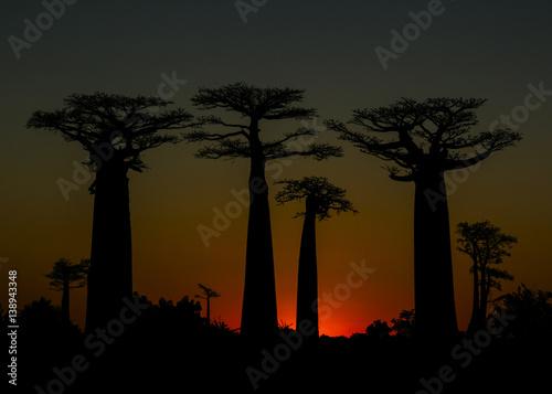 Fotobehang Baobab Madagascar Baobab Avenue