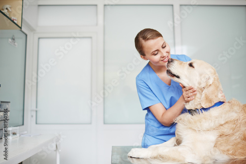 Young female veterinarian in blue uniform hugging and talking to white fluffy labrador lying on table during check-up - 138950364
