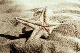 Fototapety Stella marina nella sabbia