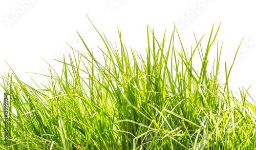 tiges d'herbe sur fond blanc  © Unclesam