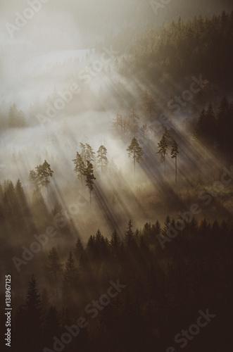 Las skąpany w promieniach - 138967125