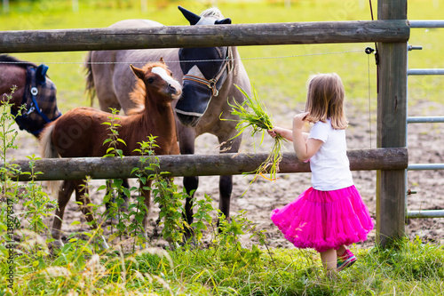 Poster Little girl feeding baby horse on ranch