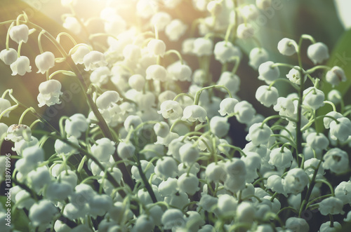 Fotobehang Lelietjes van dalen Flower lily of the valley, closeup, spring