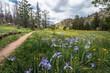 Greyrock Meadows Trail, Poudre Canyon, Colorado