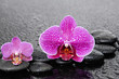 still life with pebbles and two gorgeous orchid