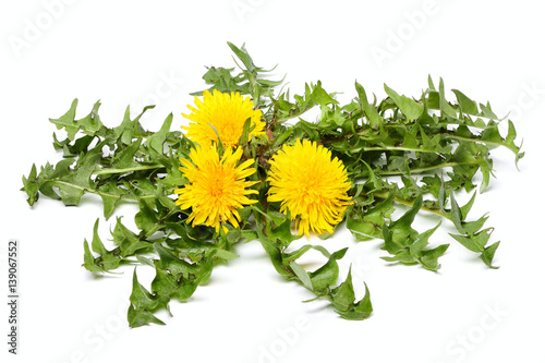 Dandelion flowers with leaves isolated. - 139067552