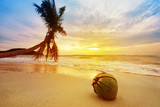 Coconut on the beach. Sunset time. Sea, sky and palm blured on background. Focus on coconut.