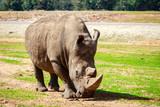 a rhinoceros at the israeli zoo