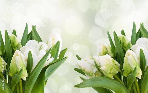 White tulips bouquet.