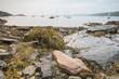 Rockport Harbor Intertidal zone