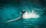 Dolphin motion movement beautiful