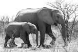 Elefantenmutter mit Jungtier im Etosha Nationalpark