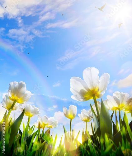 Fotobehang Tulpen art Spring tulip flower on blue sky background; Happy Easter Day