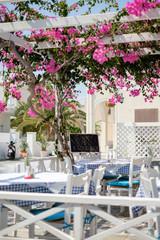 flowers of taverna on Santorini island, near black beach