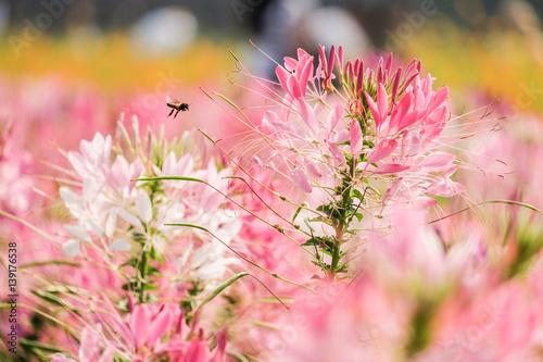 Aluminium Candy roze Beautiful flowers in garden