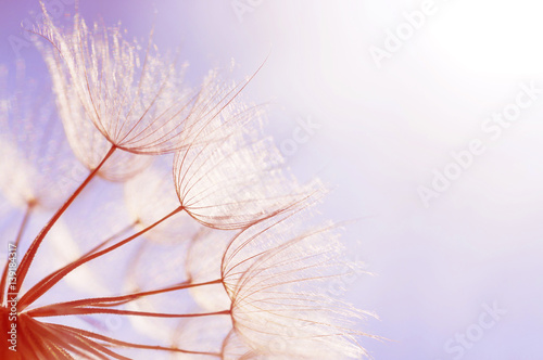 abstract dandelion flower background - 139184317
