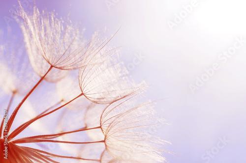 abstract dandelion flower background - 139184317