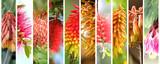 Native Australian plants set - 139204547