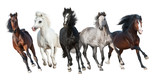 Horse herd run forward isolated on white background - 139207503