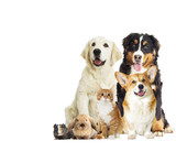 Group of pets on white background