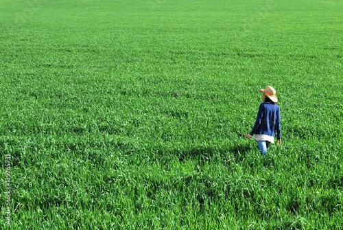 Poster buğday tarlası