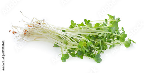 young sunflower sprouts isolated on white background
