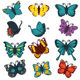 Butterflies species types decoration design element vector icons set