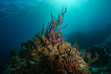 Tropical reef with purple rope sponge reaching towards sunlight