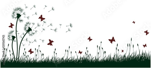 Fototapeta Dandelions with butterflies.