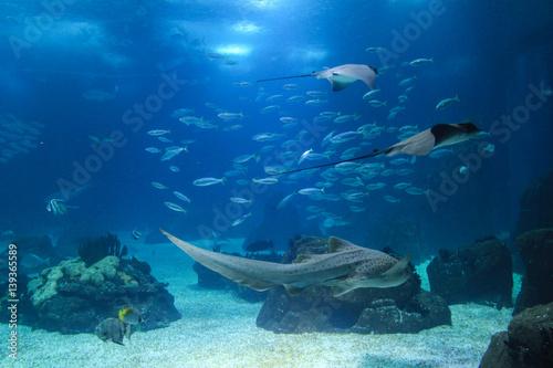 Tuinposter Koraalriffen Fish in oceanarium in Lisbon Portugal