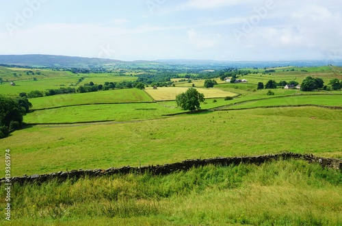 Foto op Plexiglas Pistache Stone walls in fields in an English countryside landscape