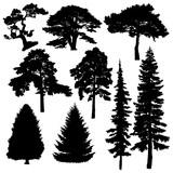 Хвойные деревья векторные силуэты на белом фоне.