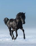 Darmowy czarny koń w polu w zimie.