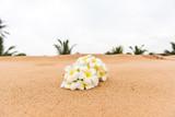 White Plumeria (frangipani) flower on sunny beach sand.