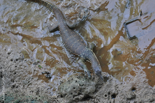 Poster Monitor lizard