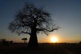 Big baobab silhouette, Tarangire National Park, Tanzania