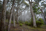 Mist in the morning in bushland in Australia