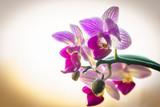 Fototapety Orchidee im Traum