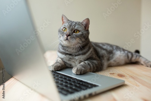 Poster cat using the computer