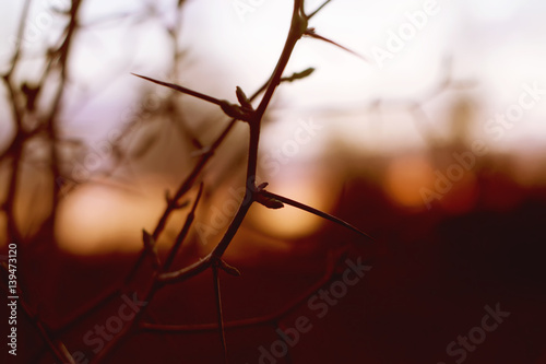 Fotobehang Rood paars Hawthorn branches on autumn sunset background