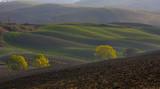 L'alba tra le colline Senesi