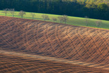 Beautiful minimalistic landscape with striped wavy fields of South Moravia at sunset. Abstract nature background with brown ground and trees. Rolling hills in spring in  Czech republic. Agriculture