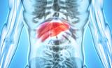 3D illustration of Liver. - 139481127