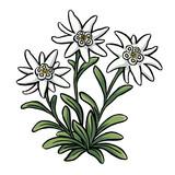 Edelweiss - 139483771
