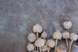 Dried poppy heads and grains. Opium drugs, opiate, heroin