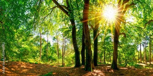 Sommer im Wald bei strahlendem Sonnenschein