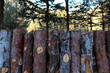 natural wooden fence of rough pieces of wood and forest on background